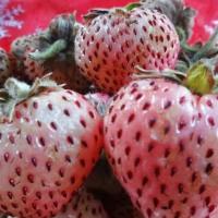 Frutillas en lavandina