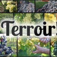 Bodega Alta Vista cede el uso de la marca Terroir para que lo puedan usar todas las bodegas!!